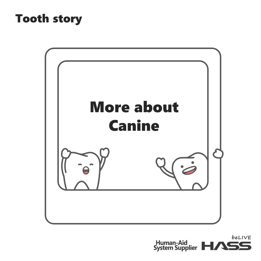 [Tooth story] Origin of Canine